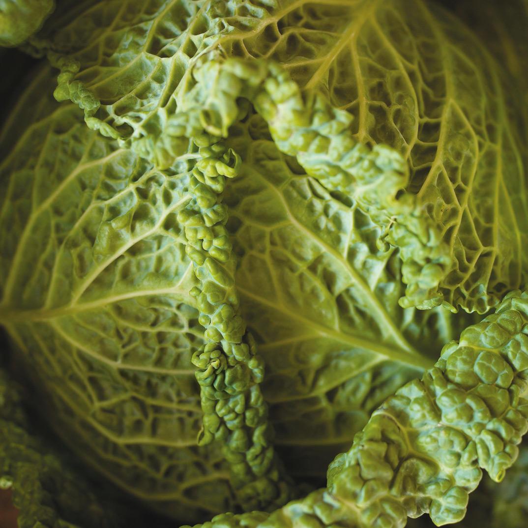 Cabbage Au Gratin